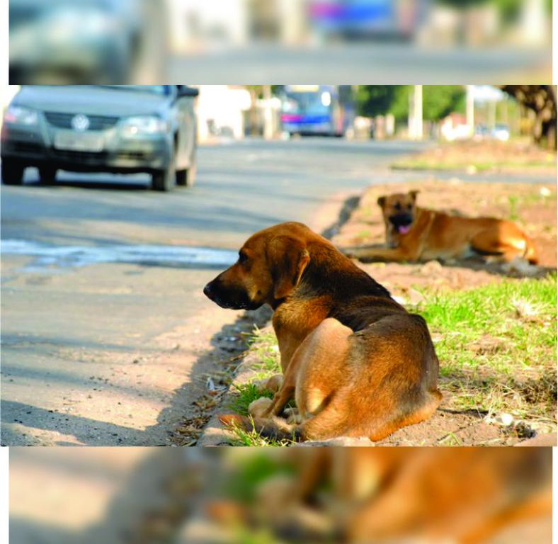 cães-adoção.jpg