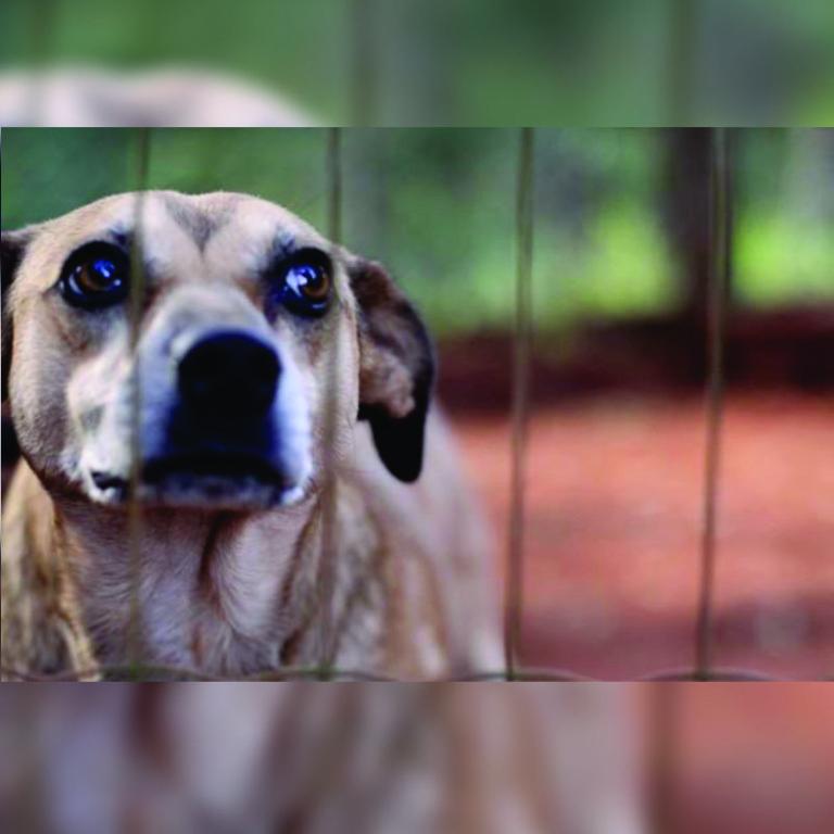 denuncia-maus-tratos-animais-01.jpg