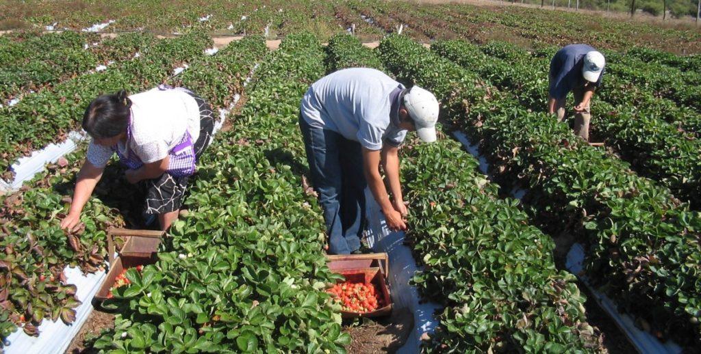 f17-10-17-Receita-federal-vai-liberar-nota-fiscal-eletronica-para-agricultores.jpg