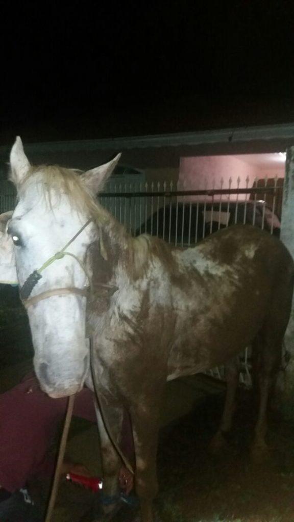 f201217-Cavalo-ai-em-vala-1.jpg