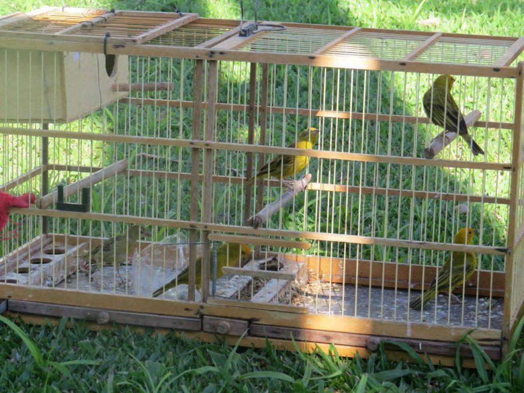 f17-04-18-soltura-das-aves.jpg